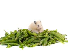 Free Hamster And Peas Royalty Free Stock Images - 5507989