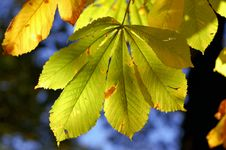 Free Leafs On Tree Royalty Free Stock Image - 5508006