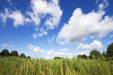 Free Blue Sunny Summer Sky Royalty Free Stock Photo - 5508095