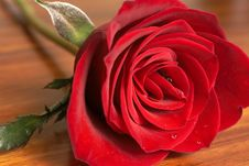 Free Dark Red Rose On Wooden Table Stock Photos - 5508903