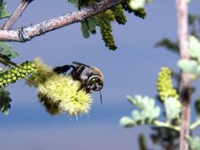 Free Bee Perched On Flower - Horizontal Stock Image - 5509871