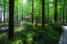 Free Pavilion In The Forest Stock Photos - 5509963