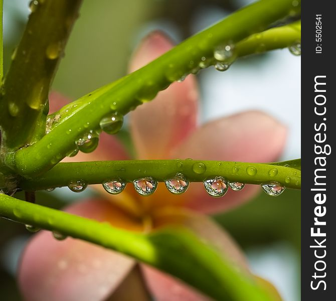 Liquid Floral Beads