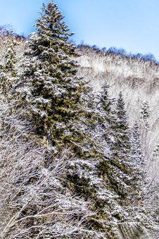 Free Winter Landscape Royalty Free Stock Photo - 55013085