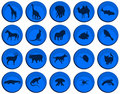 Free Animals Buttons Stock Image - 5514001