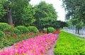 Free Flower Road Royalty Free Stock Photos - 5514628
