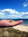 Free Shell At Hand Royalty Free Stock Photo - 5516505