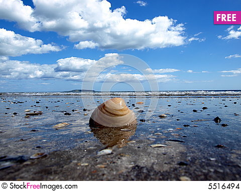 Free Shell At Beach Stock Images - 5516494
