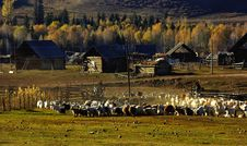 Free Bucolic In Village Royalty Free Stock Photography - 5510267