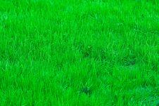 Free Poison Green Stock Photo - 5510920