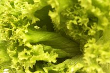 Free Lettuce For A Salad Royalty Free Stock Photography - 5512027