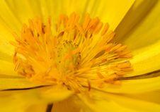 Free Yellow Flower Royalty Free Stock Image - 5512166