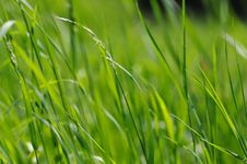 Free Grass. Stock Photography - 5512182
