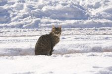 Sitting Tabby Cat Stock Image