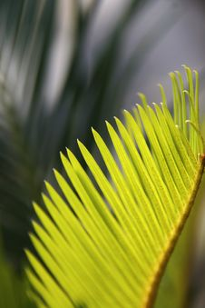 Free Palm Leaves Stock Photos - 5513393