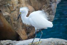 Free Fringed Bird Stock Photo - 5513580
