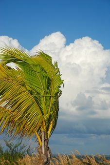 Free Palm Leafs Royalty Free Stock Photos - 5513878