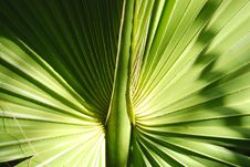 Free Palm Leaf Stock Photos - 5513893