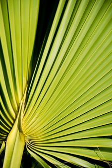 Free Palm Leaf Stock Photo - 5513940