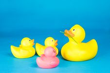 Free Four Rubber Ducks Royalty Free Stock Photo - 5514325