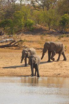 Free Elephant In Sabi Sands Stock Photo - 5514340