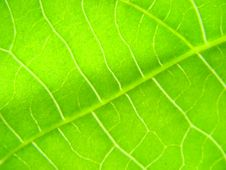 Free Green Leaf Macro Lines Stock Image - 5514441