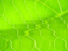 Free Green Leaf Macro Vains Bright Stock Images - 5514504