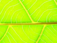 Free Green Leaf Macro Lines Royalty Free Stock Images - 5514539