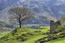 Free Tree And Barn In St Johns In Th Vale Royalty Free Stock Photography - 5515137