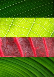 Free Leaf Collage Green Royalty Free Stock Photography - 5515157