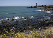 Free Lighthouse And Flowers Stock Photo - 5515250