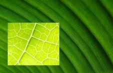 Free Leaf Macros Bright Dark Royalty Free Stock Photo - 5515295