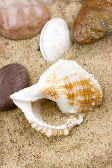 Free Sea Shell Royalty Free Stock Photography - 5515377