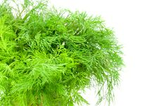 Free Green Dill Royalty Free Stock Image - 5515386