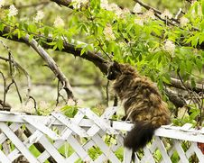 Free Cat On A Fence Royalty Free Stock Photography - 5516367