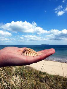 Shell At Hand Royalty Free Stock Photo