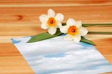 Free Letter With Flowers Stock Photography - 5516562