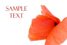 Free Red Poppy Royalty Free Stock Images - 5517159