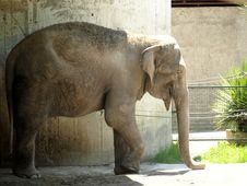 Free The Elephant Royalty Free Stock Photography - 5517697