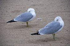 Free Frozen Beaks Stock Photography - 5517742