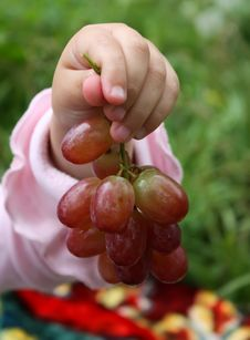 Kid S Hand With Grape Royalty Free Stock Image