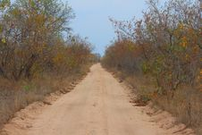 Free Safari Road Stock Photo - 5518440