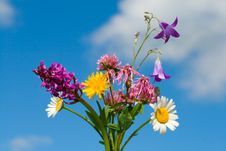 Free Bunch Of Wildflowers Stock Photography - 5518442