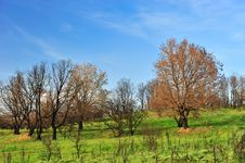 Free Burned Trees And Green Grass Royalty Free Stock Photos - 5518588