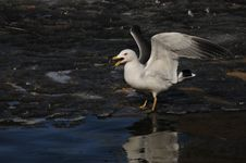Free Seagull Stock Image - 5519151