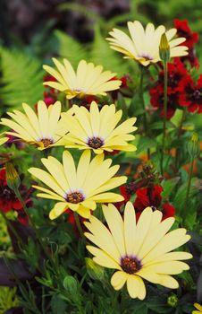 Free Blooming Yellow Flowers Stock Photo - 5519190