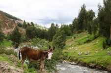 Free Donkey By The River Stock Photo - 5519310