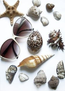 Free Solar Glasses And Different Seashells Stock Image - 5519331