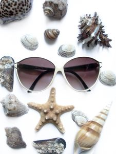 Free Solar Glasses And Different Seashells Stock Photos - 5519333