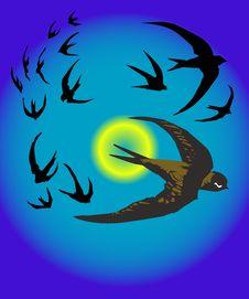 Free Birds Illustration Stock Photography - 5519512